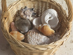 collecting-shells